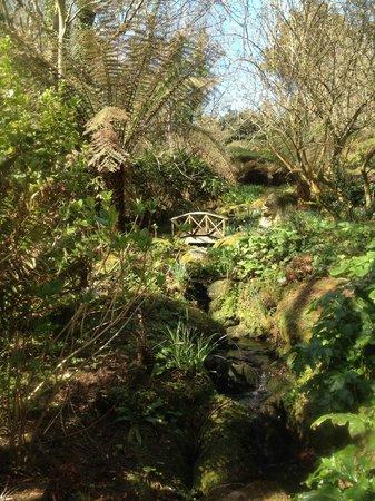 Cove Cottage: Botanical bridge