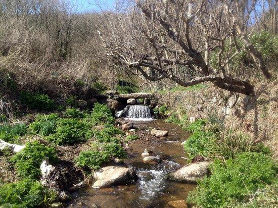Cove Cottage : Water bridge in botanical garden