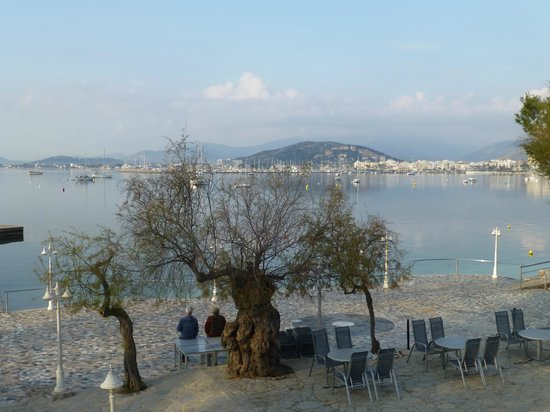 Hotel Illa d´Or: tamarisk in foreground of bay view