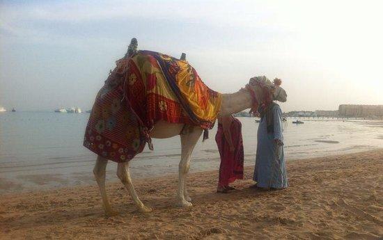 Giftun Azur Resort : Oscar the Camel