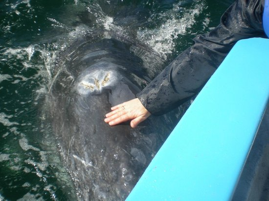 Ecoturismo Kuyima S.P.R. de R.L.: Escursione balene