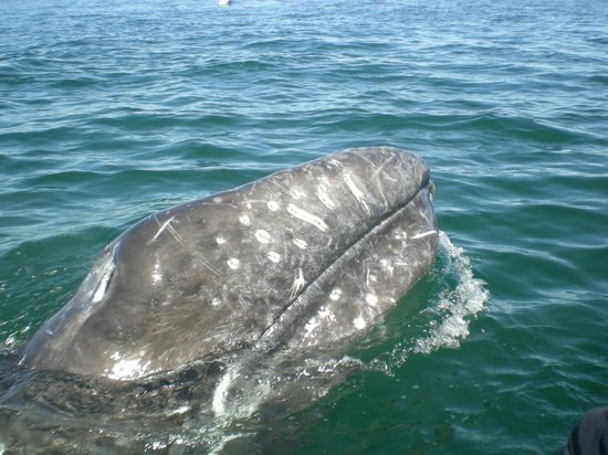 Ecoturismo Kuyima S.P.R. de R.L.: Whales watching