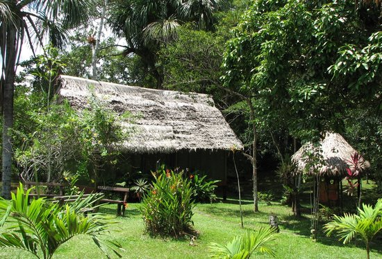 Amazonas Sinchicuy Lodge: sinchicuy Lodge
