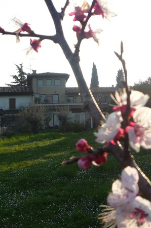 Monte Maino Bed and Breakfast : veduta del bed and breakfast dal giardino