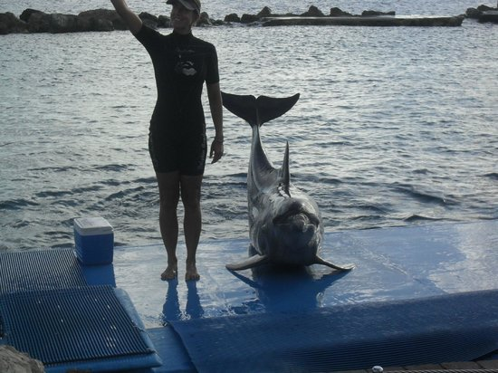 Dolphin Academy Curacao : Trainer introduces dolphin to audience