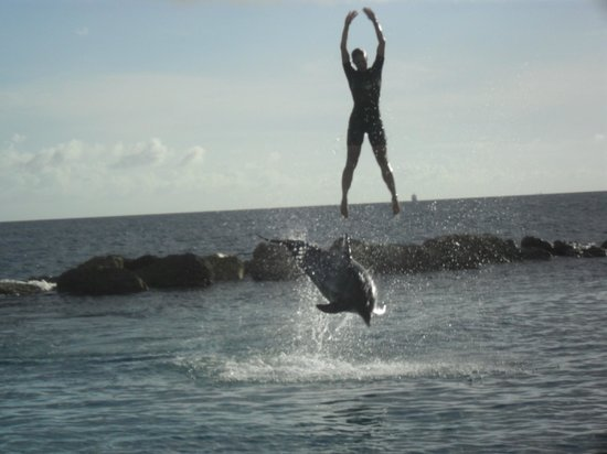 Dolphin Academy Curacao : Trainer jumping up from the dolphin