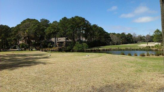 Hilton Head Marriott Resort & Spa: George Fazio Golf Club