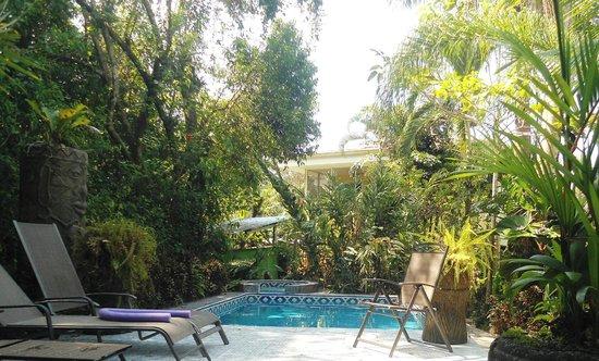 La Posada Private Jungle Bungalows: Pool & trees where monkeys came down