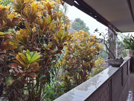Alamanda Accommodation: A rainy view off our balcony from room #2.