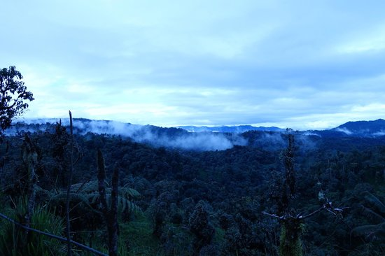 Casa Divina Lodge : Cloud forest view