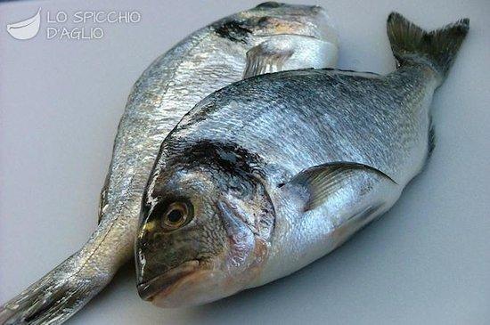 Sud Pesca