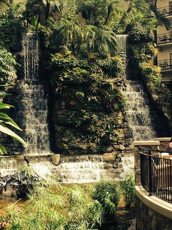 Gaylord Opryland Resort & Convention Center : Falls