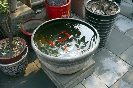 Shijia Hutong: Fish at the Hutong house