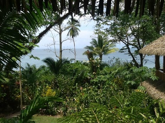 Copa de Arbol Beach and Rainforest Resort: From our front porch