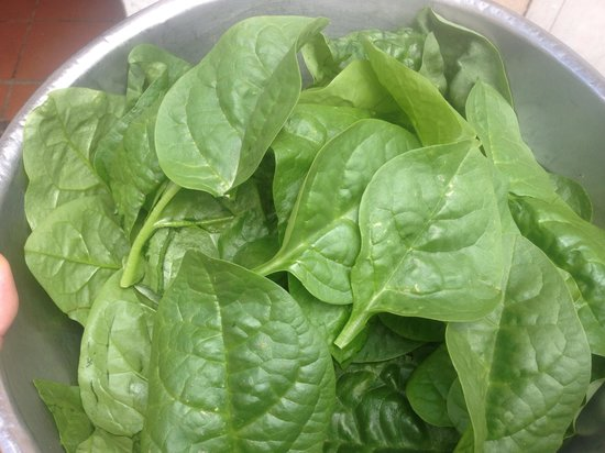 The Twisted Cork Cafe: Spinach from the garden