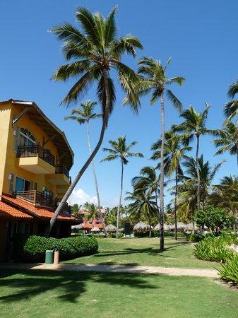 Tropical Princess Beach Resort & Spa: cocotiers