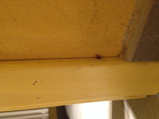 Residence Masone: La ragione delle ragnatele in bagno
