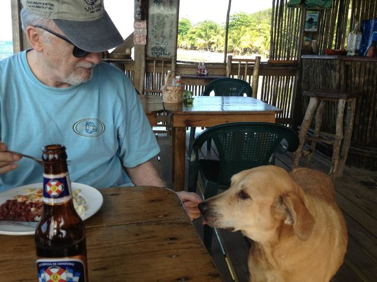 La Sirena de Camp Bay : How's the fish? Excellent!