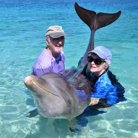 Roatan Institute for Marine Sciences - Anthony's Key Resort: Dolphin encounter photo
