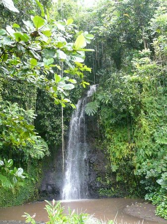 Faa'a, Polinezja Francuska: Waterfall at the Water Garden of Vaipahi on Tahiti