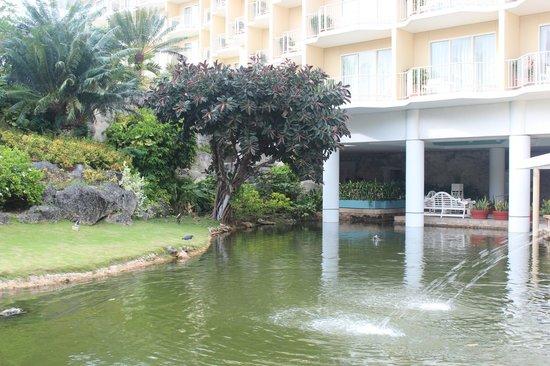 Hyatt Regency Saipan: Цапля