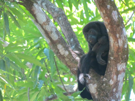 La Mansion Bed & Breakfast: monkey and baby is the garden