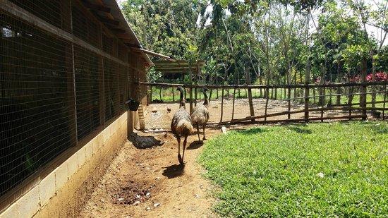 MiniZoo y Jardín Yori: Emus