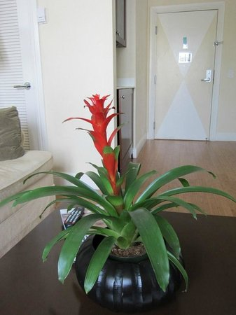 Angler's Miami South Beach, a Kimpton Hotel: plant in room