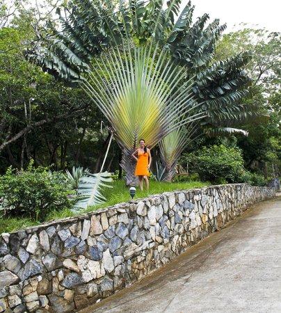 Xbalanque Resort: road off tamarind drive