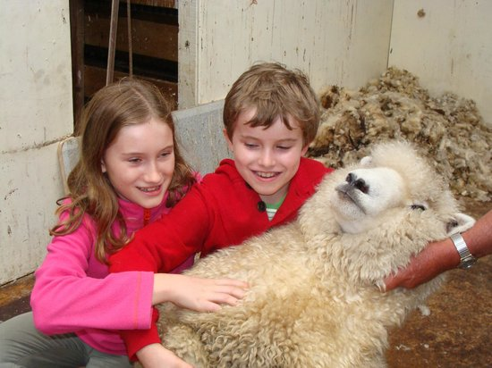 Pete's Farm Stay B&B: kids with sheep