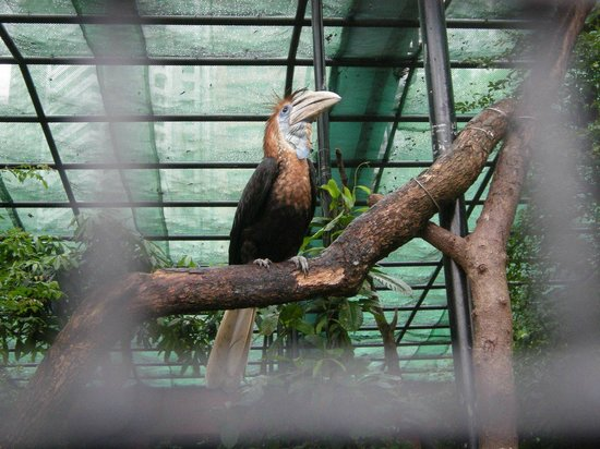 Hong Kong Zoological and Botanical Gardens: вольер с птицами