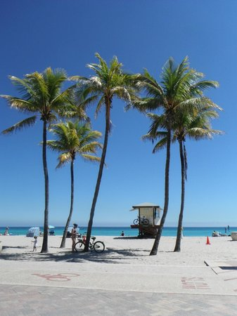 Palm Trees At Hollywood Beach