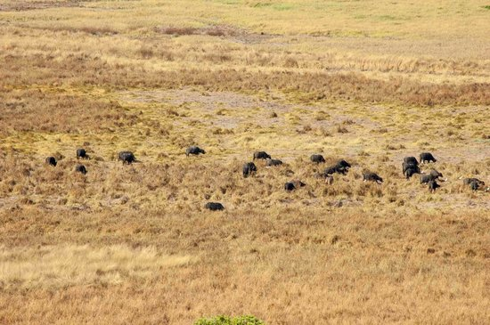 Window on the Wetlands Visitor Centre : Water buffalo from the look-out
