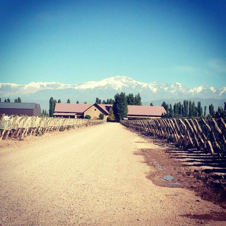 Vistalba Wine Tours : View of a winery