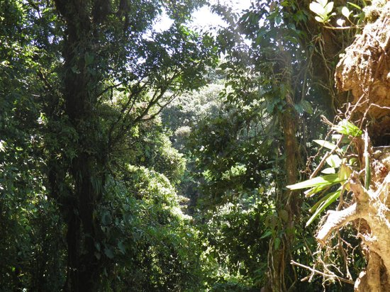 Costa Rica Unique Transfers & Tours: Monte Verde