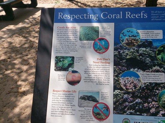 Waialea Beach: Respect... Beach69