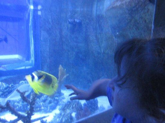 Portland Aquarium: Tank 1