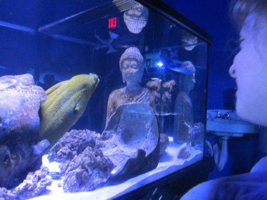 Portland Aquarium: Morray Eels