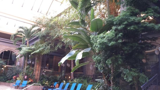 Sheraton Atlanta Hotel: Pool area so relaxing and lush