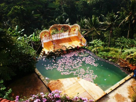 Tirta Asri Ubud: pool