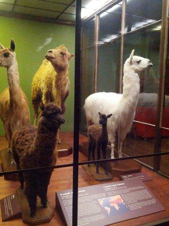 Muséum d'histoire naturelle de Vienne : Чучела