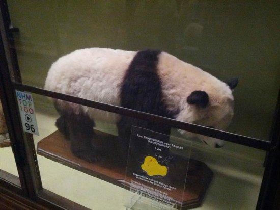 Muséum d'histoire naturelle de Vienne : Все чучела сделаны из уже мертвых животных, специально их не убивали