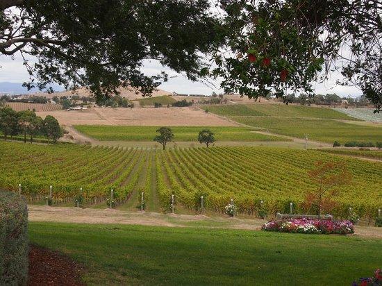 De Bortoli Winery: Beautiful vines at De Bortoli