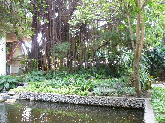 Imperial Pattaya Hotel : второй прудик с карпами койя
