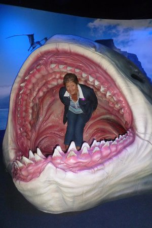 Kelly Tarlton's Sea Life Aquarium: Don't get caught like this!