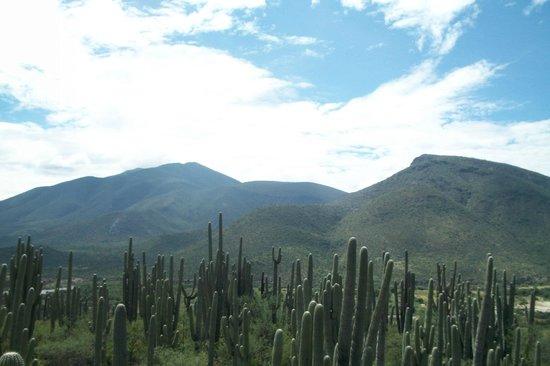 Tehuacan, Mexico: Reserva de la biósfera: Zapotitlan de Salinas 4