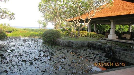 Grand Hyatt Bali: view of pond from hotel lobby