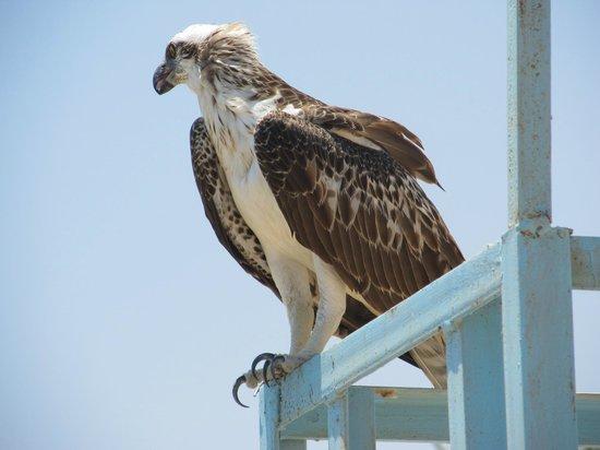 Sharm Plaza Hotel : Predator on the beach