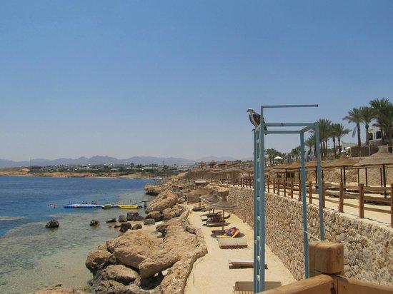 Sharm Plaza Hotel : Predator on the beach 2