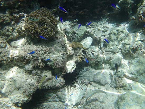 Ripples on the Bay: Rock pool fish